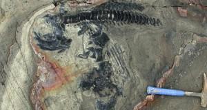Ein echter Ichthyosaurier-Friedhof