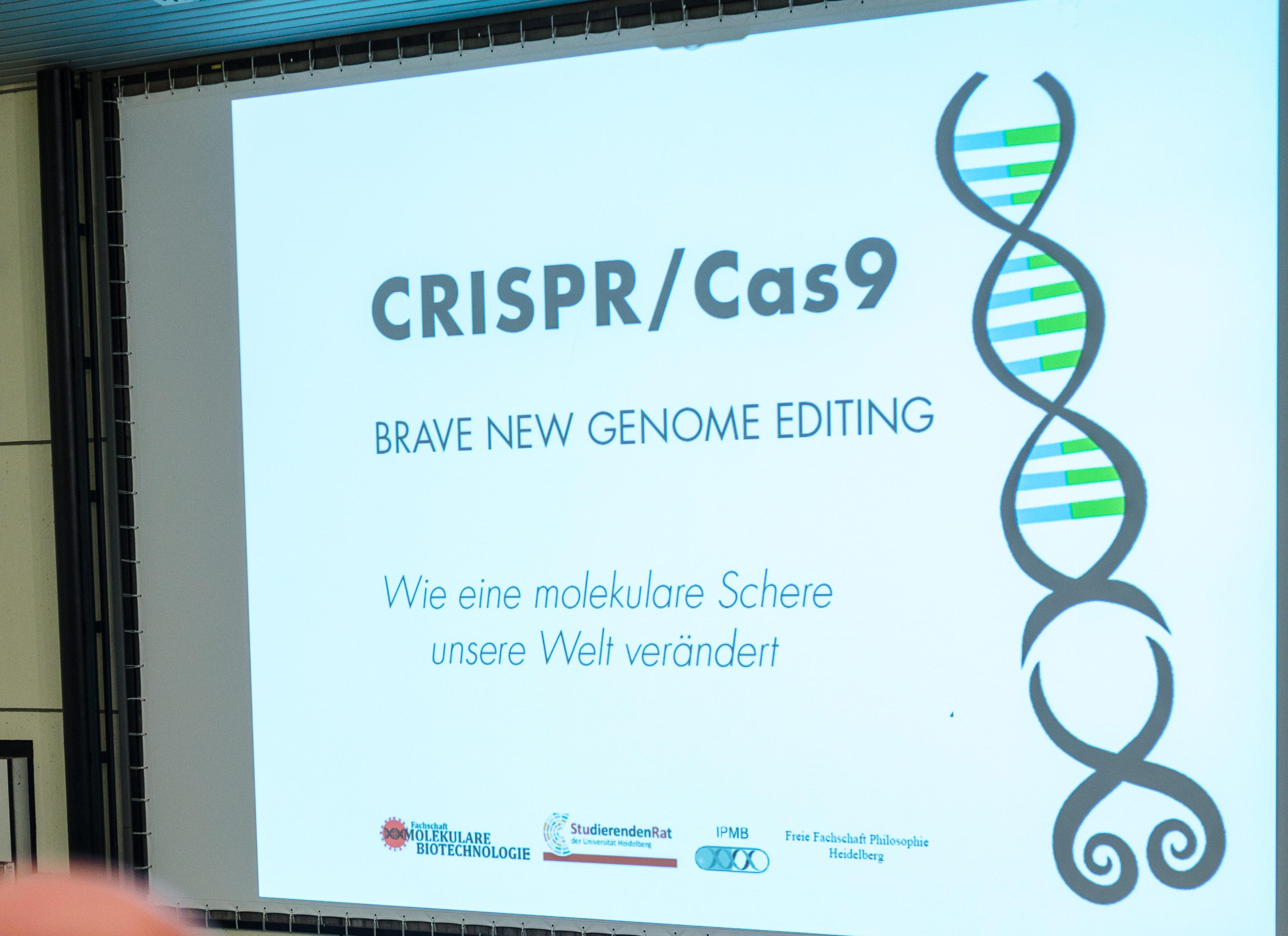 Ob Haustier oder Baby: CRISPR ist vielfältig. Bild: Nicolaus Niebylski
