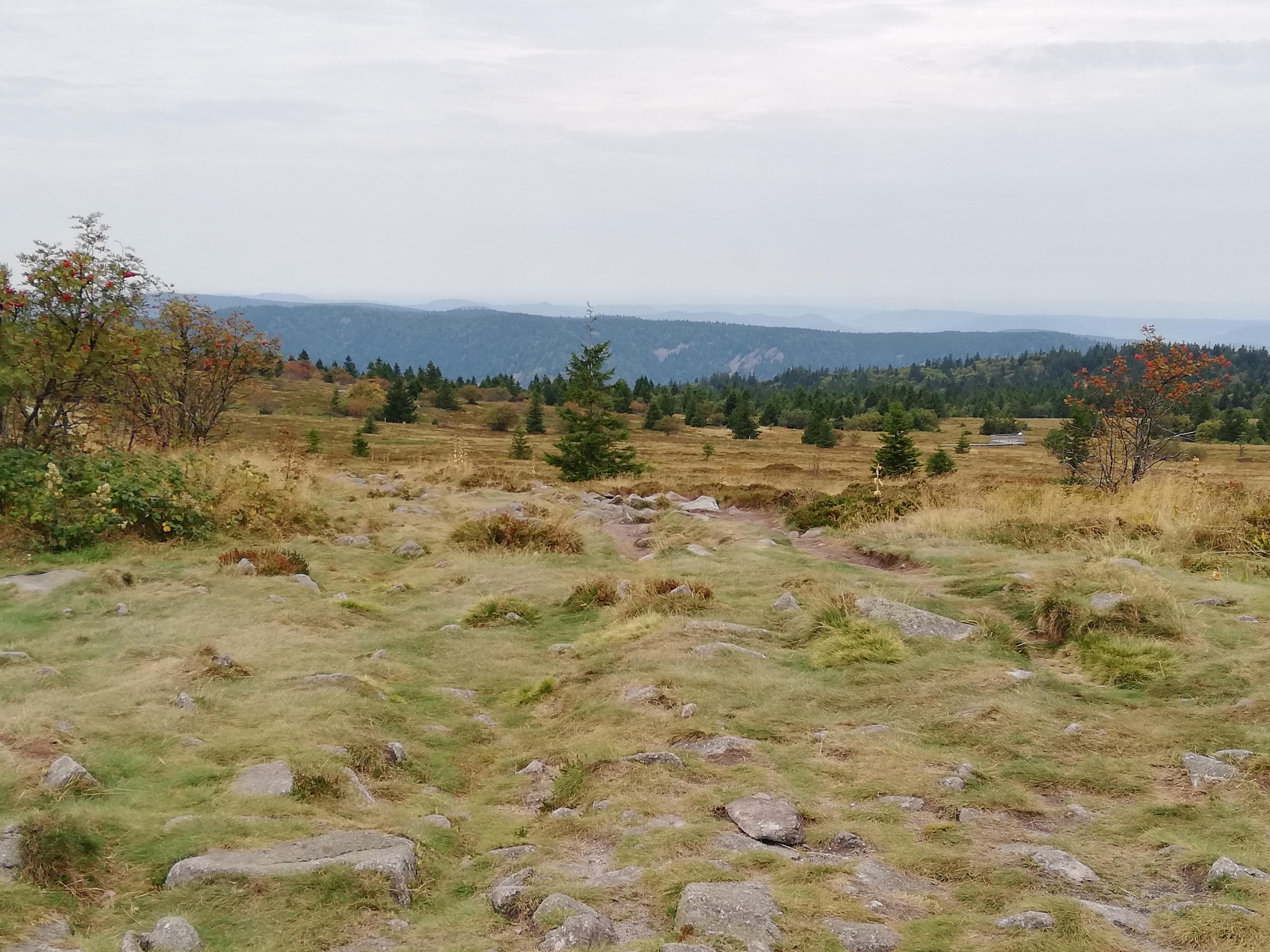 Auf dem Gipfelkamm in den Vogesen verläuft die deutsch-französische Grenze. Foto: Lina Rees