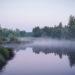 Ein Ort der Ruhe: Sommerwald kurz vor Sonnenaufgang. Foto: Nicolaus Niebylski